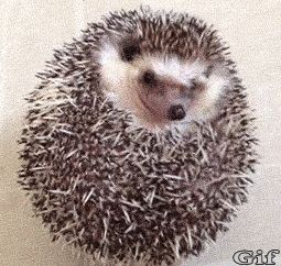 The little hedgehog  kick his quilt